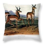 Audubon: Antelope, 1846 Throw Pillow