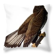 Audubon: Bald Eagle Throw Pillow