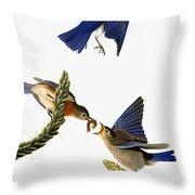 Audubon: Bluebird Throw Pillow