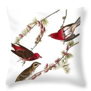 Audubon: Finch, (1827-38) Throw Pillow