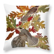 Audubon: Jay Throw Pillow