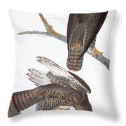 Audubon: Red-tailed Hawk Throw Pillow