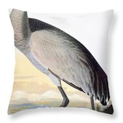 Audubon Sandhill Crane Throw Pillow