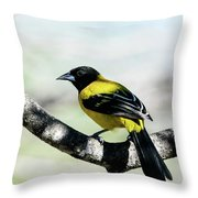 Audubon's Oriole Back Wings Throw Pillow