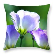 August Echoes Throw Pillow