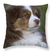 Australian Shepherd Puppy Throw Pillow