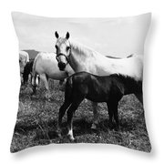 Austria: Horse Farm Throw Pillow