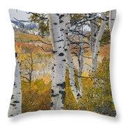Autumn Aspens 8 Throw Pillow