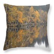 Autumn Birches On The Shore Of Lake Throw Pillow