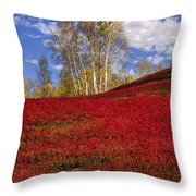 Autumn Birches And Barrens Throw Pillow