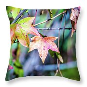 Autumn Color Changing Leaves On A Tree Branch Throw Pillow