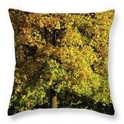 Autumn Colors 8 Throw Pillow