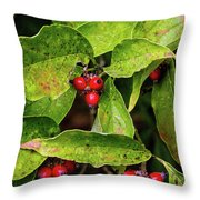 Autumn Dogwood Berries Throw Pillow