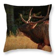Autumn Elk In Cataloochee Valley Textured Throw Pillow