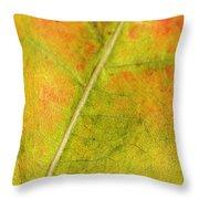 Autumn Fall Colours 1 Throw Pillow