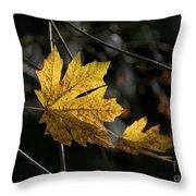 Autumn Highlight Throw Pillow