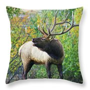 Autumn In Estes Park Throw Pillow