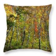 Autumn In Schooley's Mountain Park 2 Throw Pillow