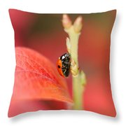 Autumn Ladybird Throw Pillow