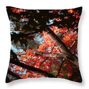 Autumn Red Trees 2015 02 Throw Pillow