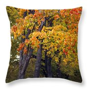 Autumn Trees In Park Throw Pillow