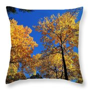 Autumn Yellow Foliage On Tall Trees Against A Blue Sky In Palermo Throw Pillow