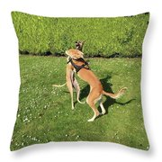 Ava The Saluki And Finly The Lurcher Throw Pillow