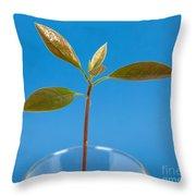 Avocado Seedling Throw Pillow
