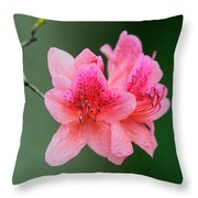 Azalea Blooms On A Green Background Throw Pillow