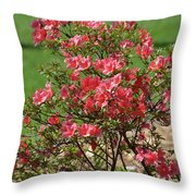 Azalea Bush 2  Throw Pillow