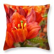 Azalea Flowers Art Prints Azaleas Gilcee Art Prints Baslee Troutman Throw Pillow