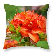 Azaleas Art Home Decor 14 Orange Azalea Flowers Art Prints Greeting Cards Throw Pillow