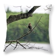 Kejimkujik National Park - Bird Throw Pillow