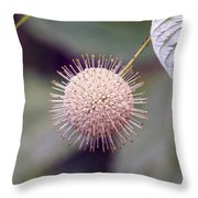 Babcock Wilderness Ranch - Buttonbush Throw Pillow