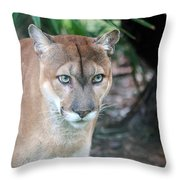 Babcock Wilderness Ranch - Oceola The Panther Gazing Throw Pillow