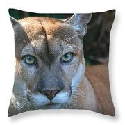 Babcock Wilderness Ranch - Oceola The Panther Pleasantly Peering Throw Pillow