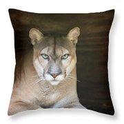 Babcock Wilderness Ranch - Portrait Of Oceola The Panther Throw Pillow