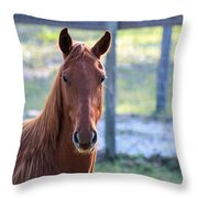 Babcock Wilderness Ranch - Red Horse Portait Throw Pillow