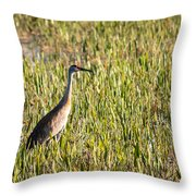 Babcock Wilderness Ranch - Sandhill Crane Throw Pillow