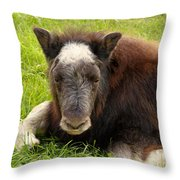 Baby Alaskan Musk Ox Throw Pillow