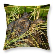 Baby Alligators Throw Pillow