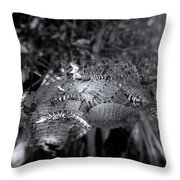 Baby Alligators On Board Throw Pillow
