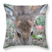 Baby Backyard Button Buck Throw Pillow