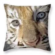 Baby Bengal Throw Pillow