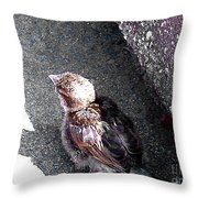 Baby Bird - Toyoung To Fly Throw Pillow
