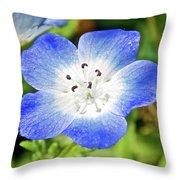 Baby Blue Eyes On Harvard Street In Claremont, California Vertical  Throw Pillow