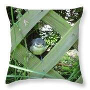 Baby Blue Tit Throw Pillow