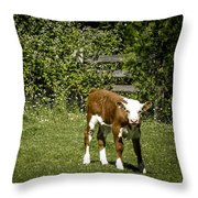 Baby Calf 2 Throw Pillow