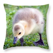 Baby Canada Goose Throw Pillow