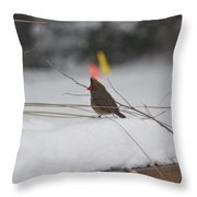 Baby Cardinal  Throw Pillow